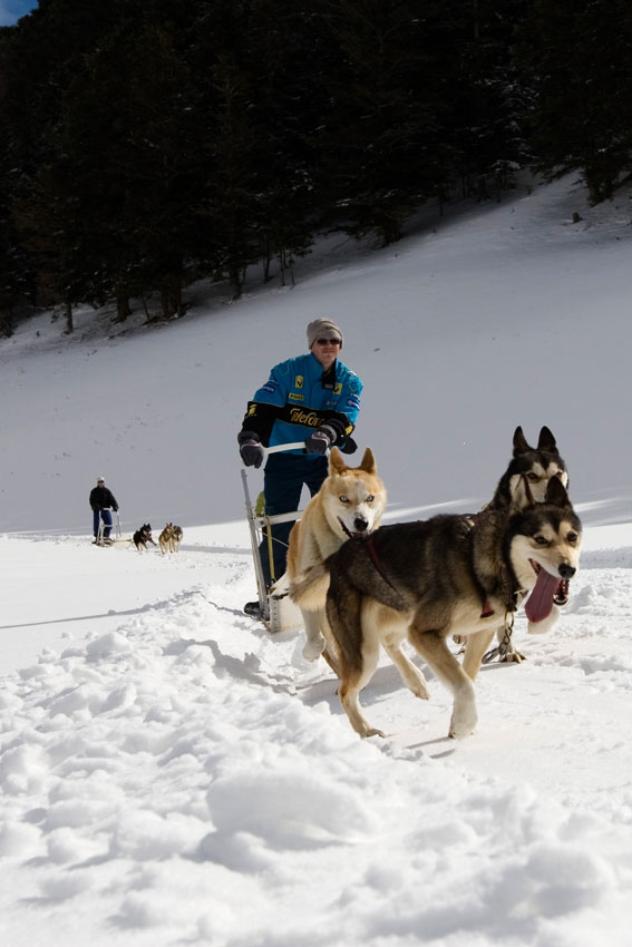 Chein de traineau -Sherpa, Louron